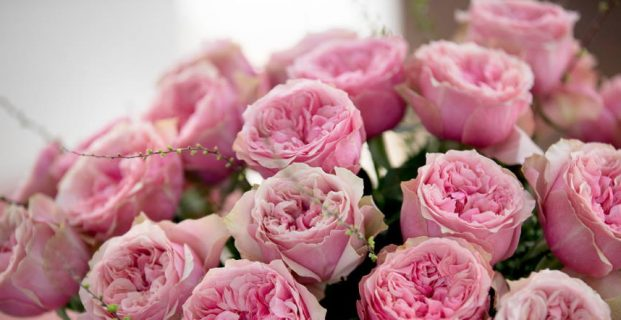 Things to know about the different forms of rose